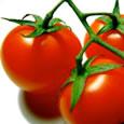 Appetizer - Tomatoey Tortilla Snack Bite